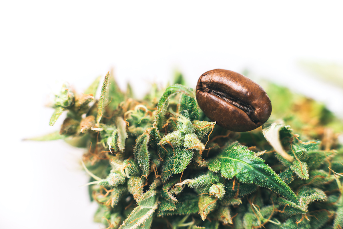 coffee bean resting on nug of cannabis flower