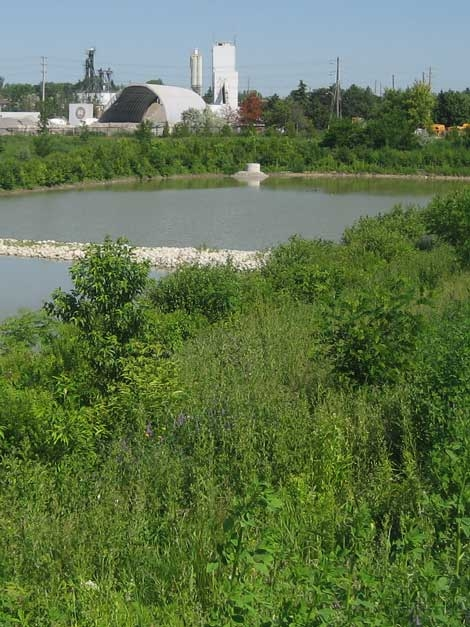 A highly bio-diverse natural landscape designed by Judith Wright for a new storm water pond.