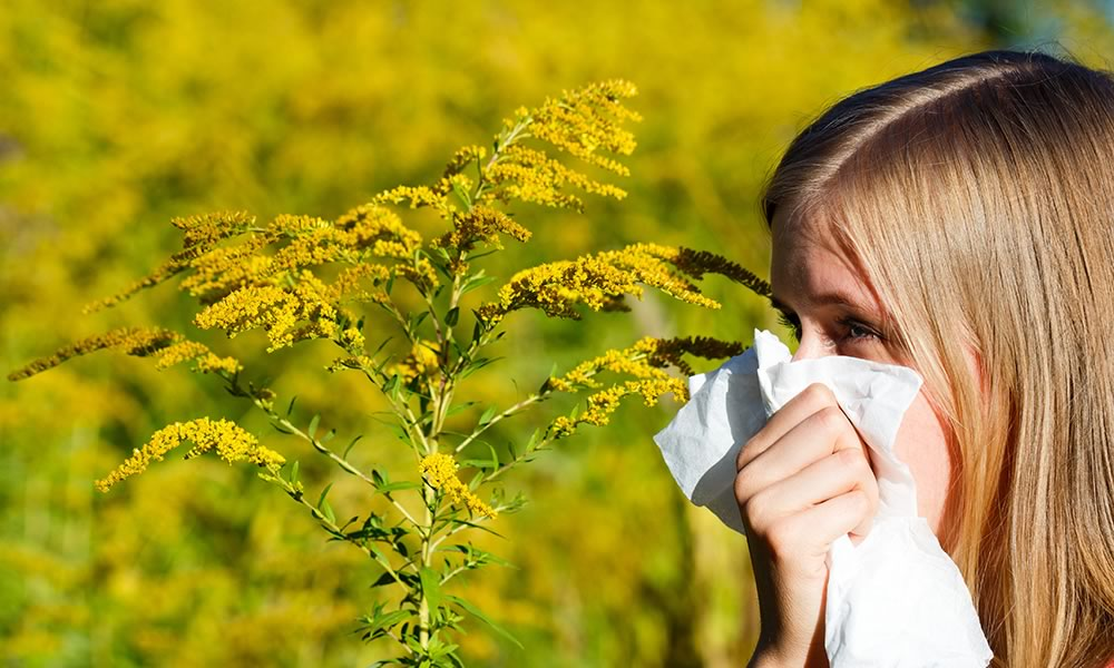 Child sneezing from ragweed allergy