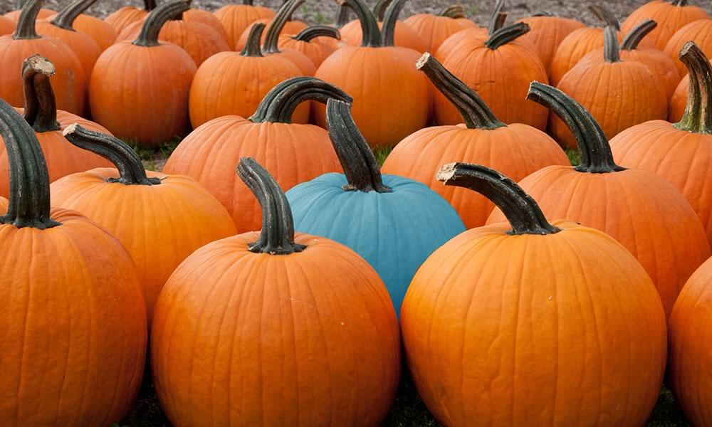 Teal pumpkin in group