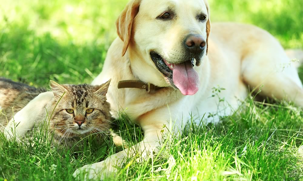 Dog and cat relaxing in grass