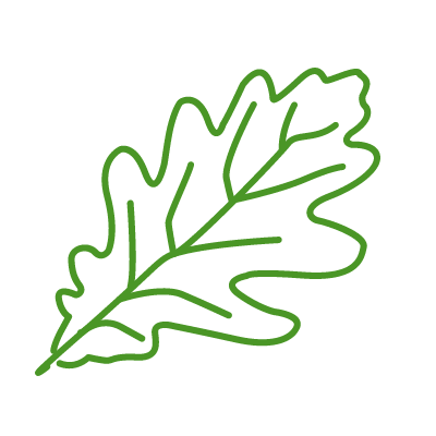 Elm tree allergen icon