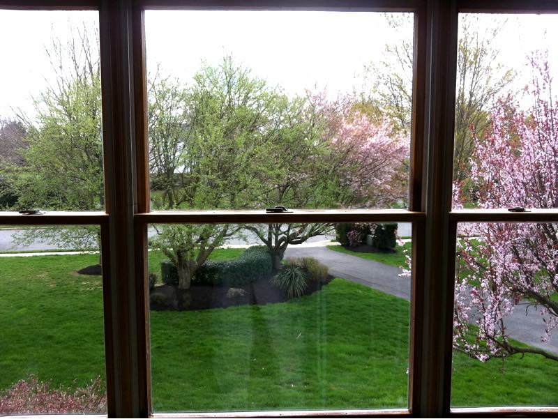 A window in Princeton NJ made to be sparkling clean