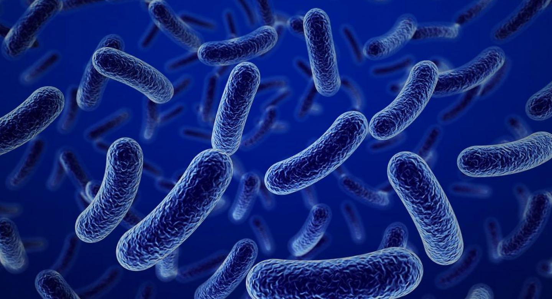 Las bacterias son los organismos más abundantes del planeta