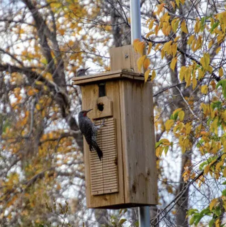 Flicker Nest Box. Image Credit: uncharteddiy.com