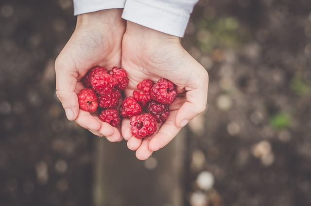 person holding a handful of berries