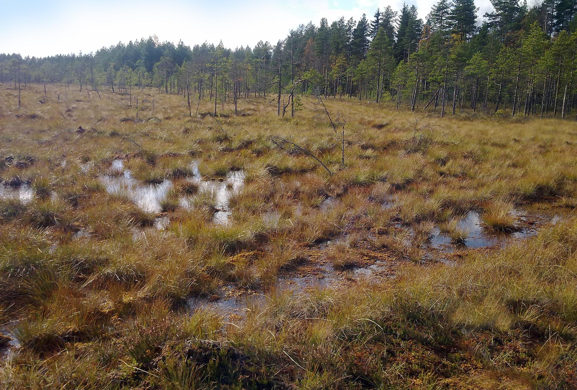 A bog re-grown two years after LSR harvesting: