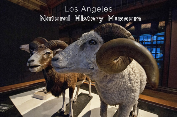 the los angeles natural history museum