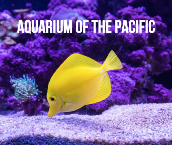aquarium of the pacific la
