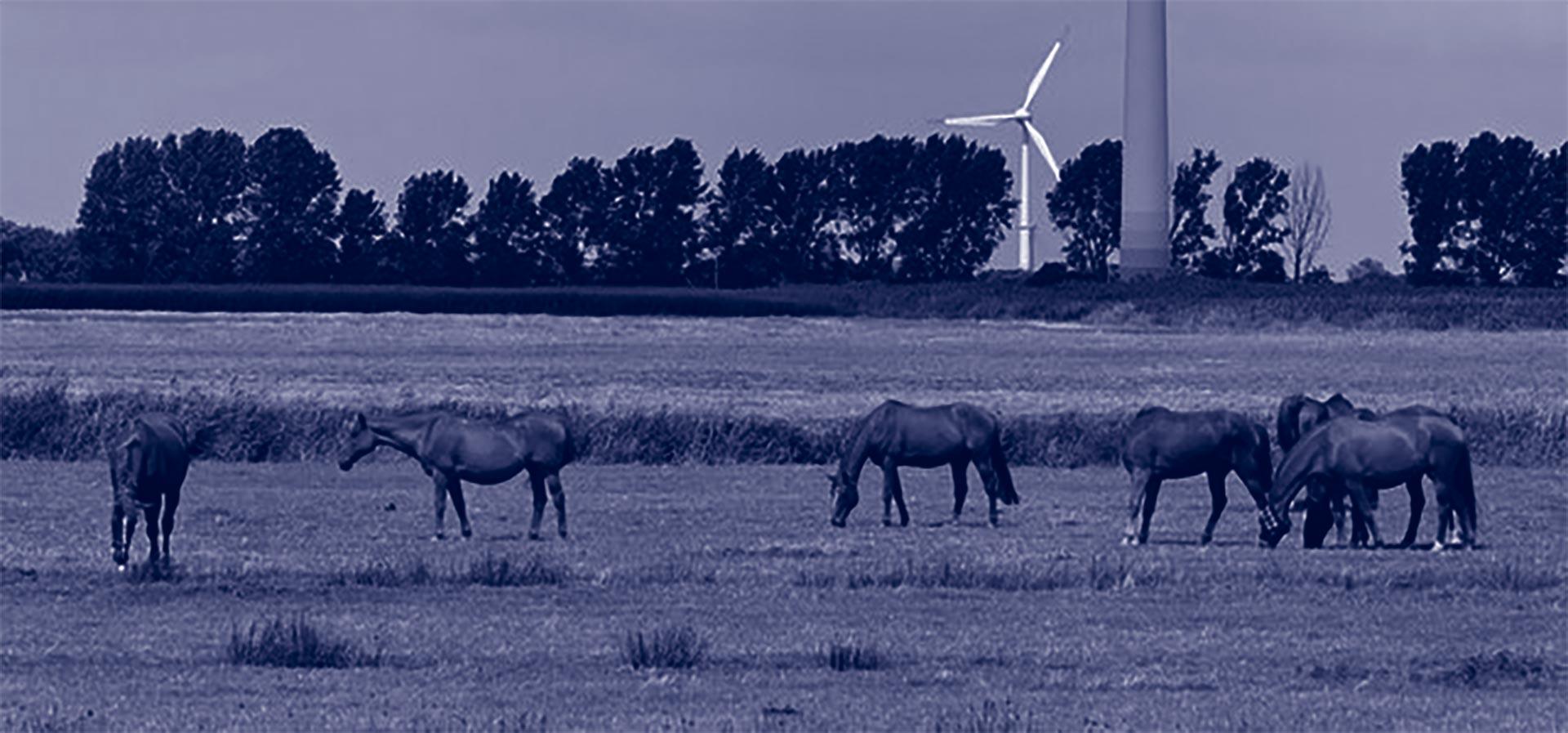 Paardenhouderij - grondgebonden