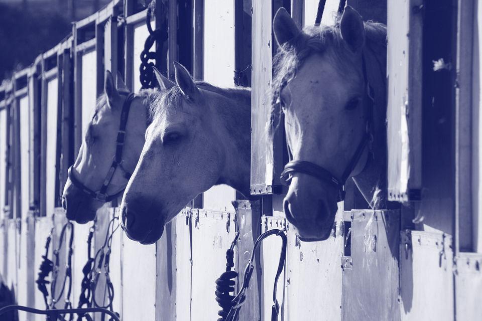 Stallingskosten paard