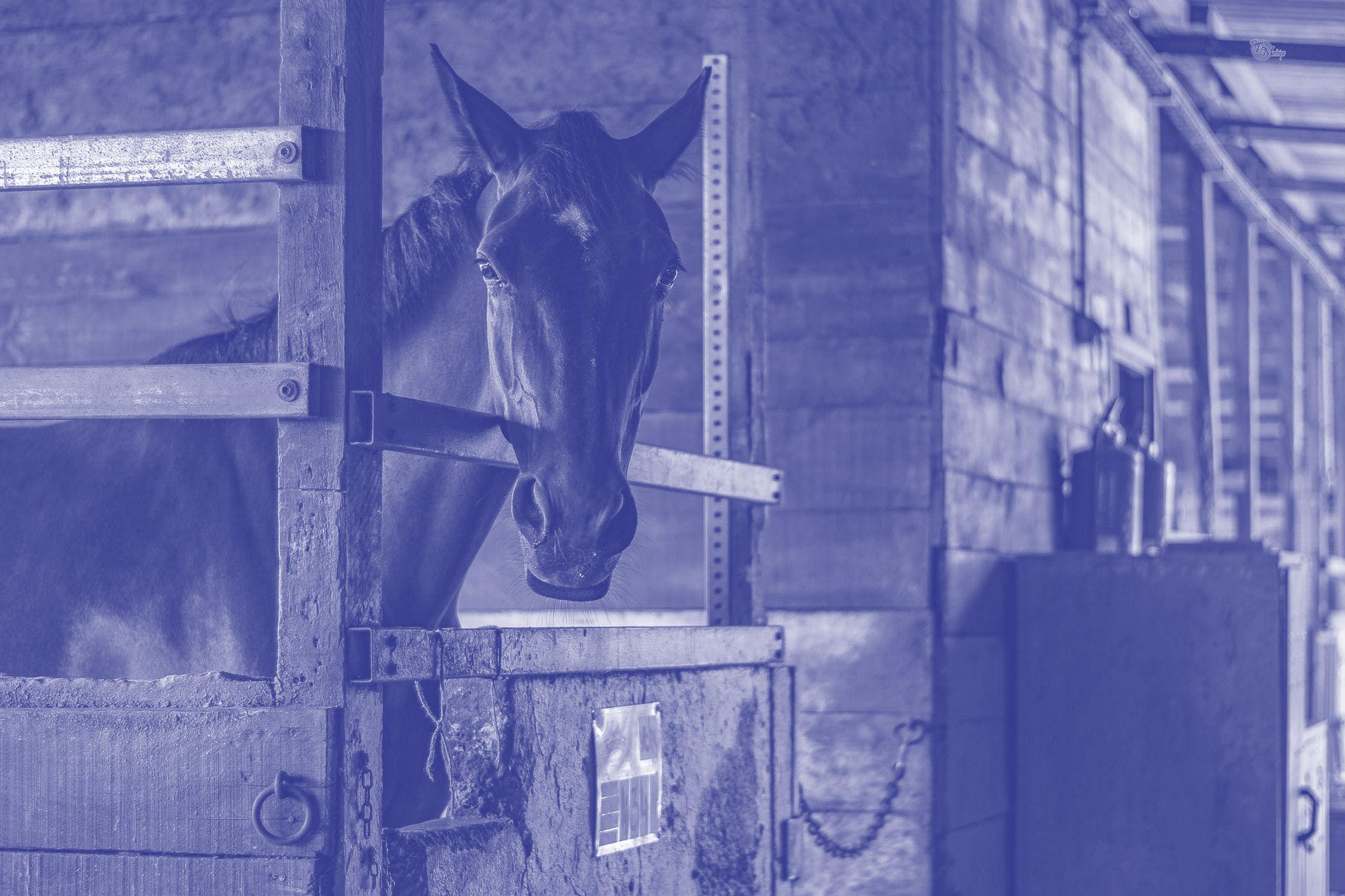 Gedragsprobleem bij paard bewezen?