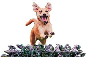 funny dog