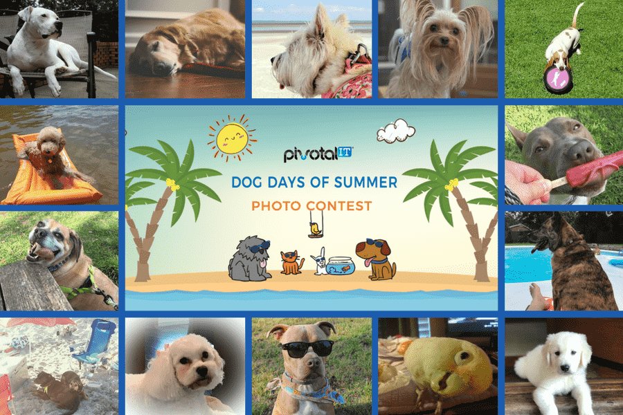 collage image of pet pictures