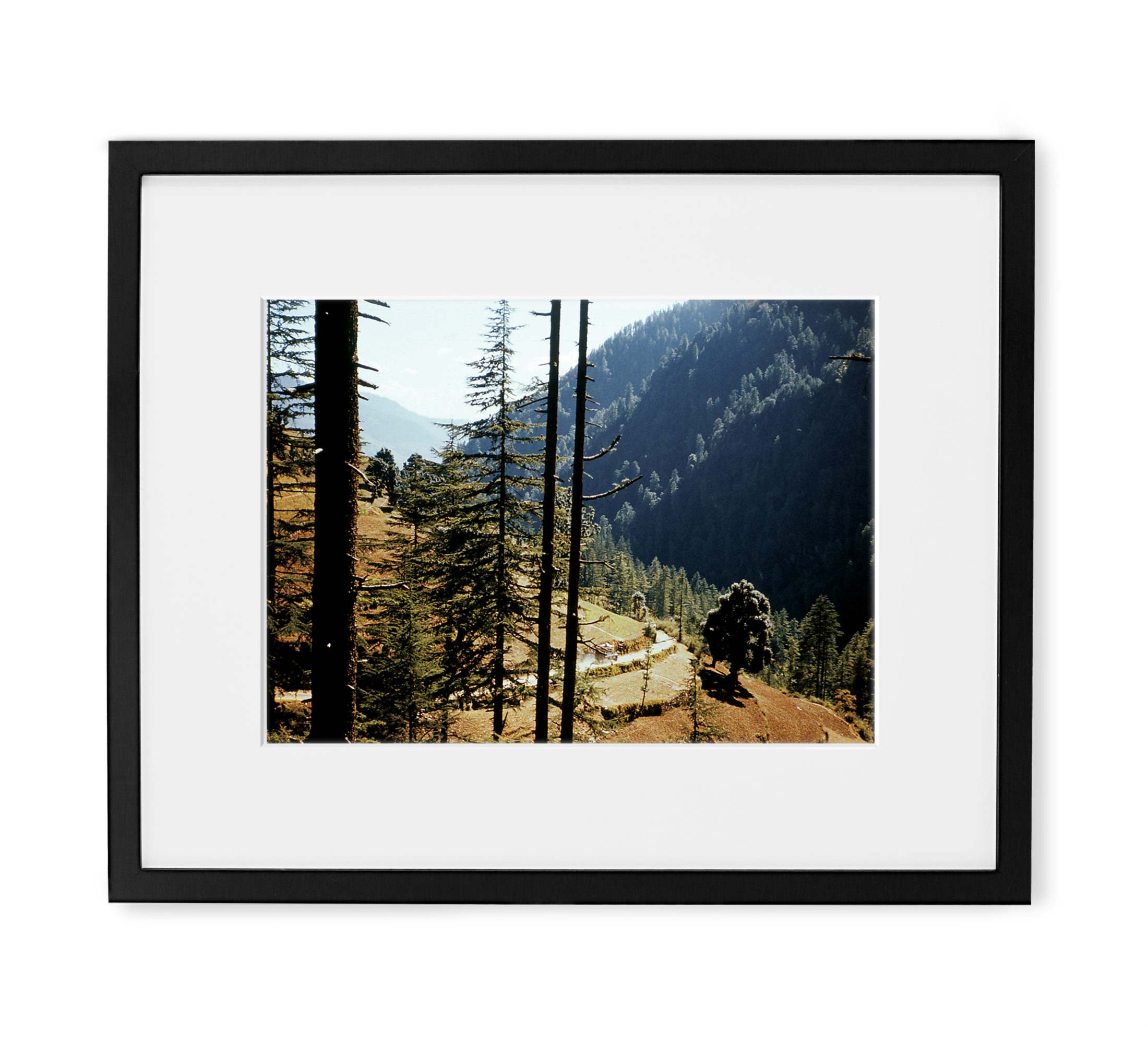 Indian Forest Drive Framed Black Wood