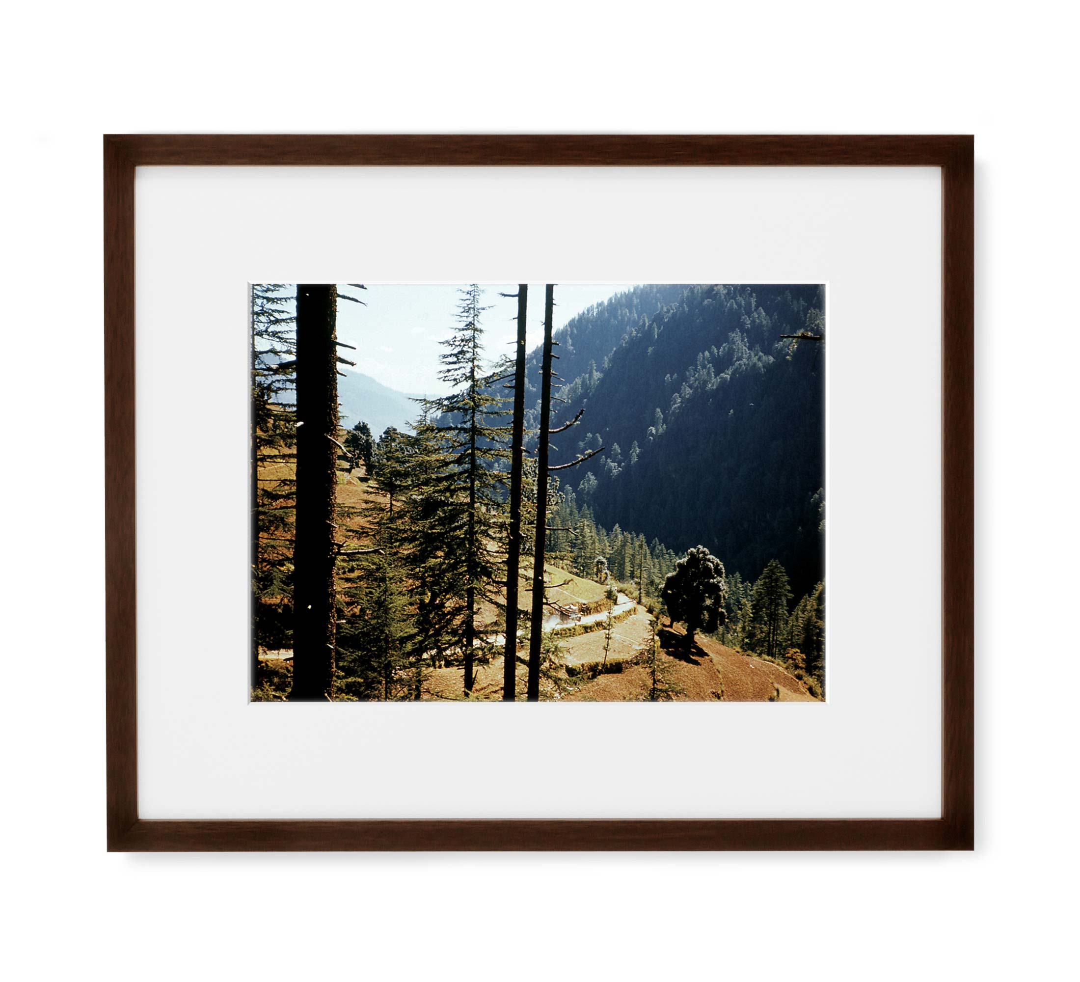 Indian Forest Drive Framed Brown Wood