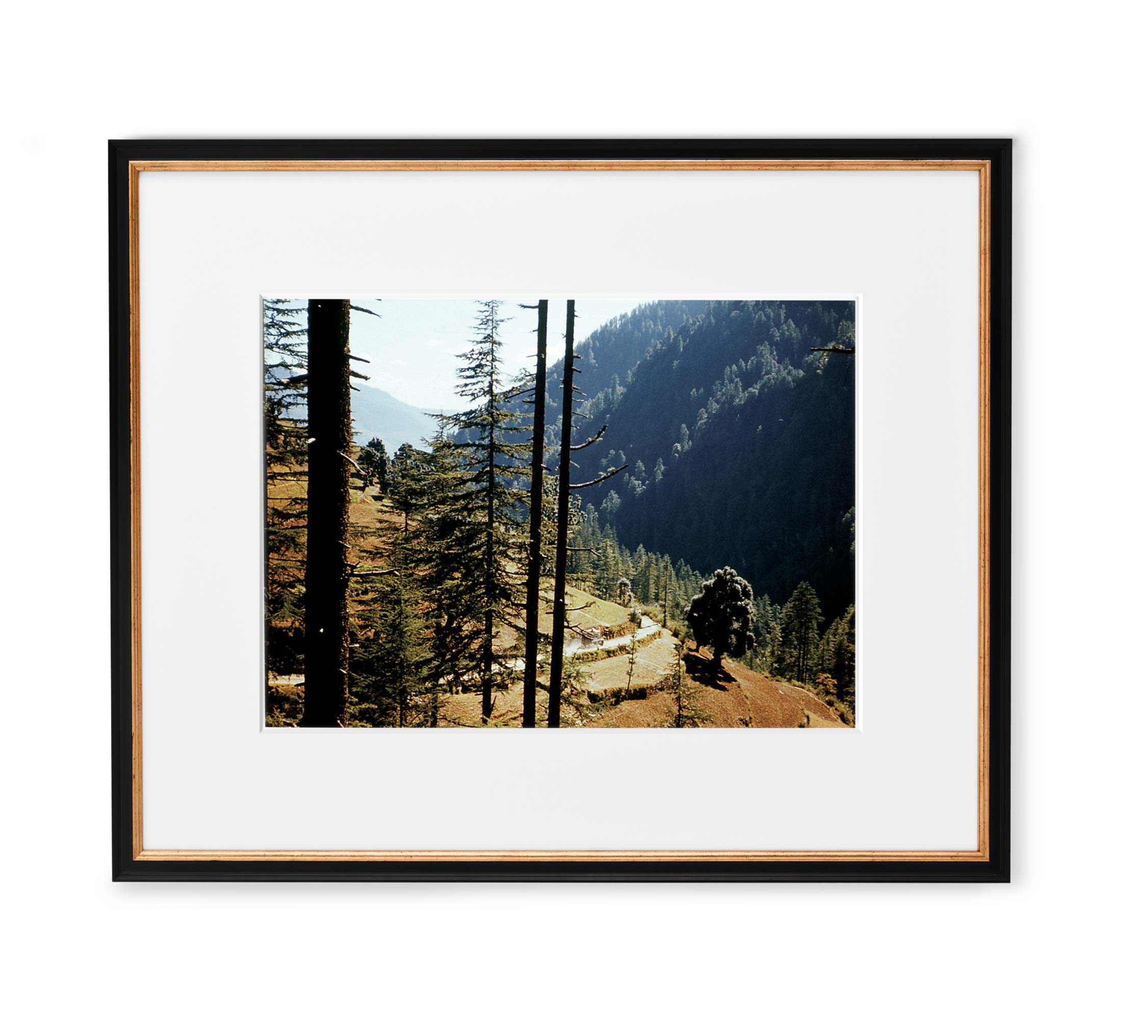 Indian Forest Drive Framed Black and Gold Wood