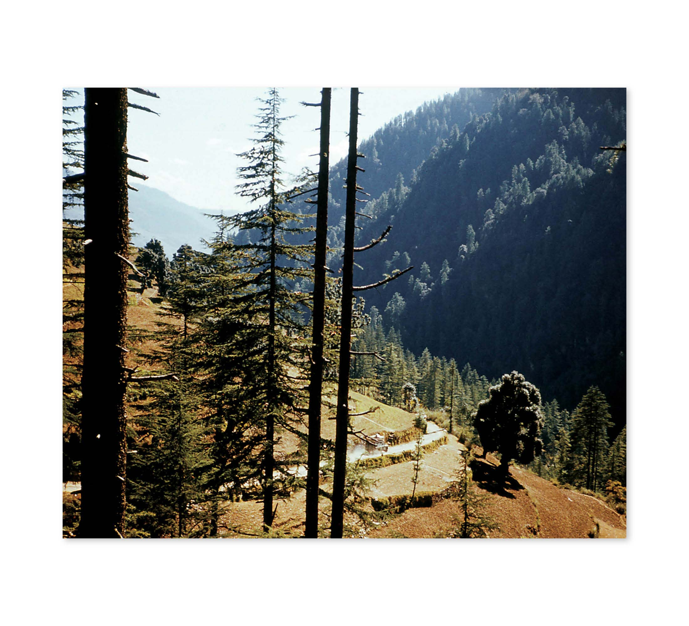 Indian Forest Drive Print
