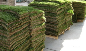 Sod Pallets in San Antonio, TX