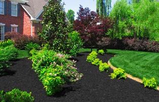 Black Mulch Planter Area