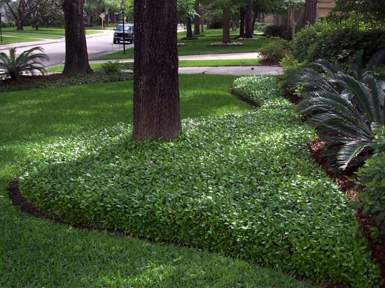 Perennials & Evergreens