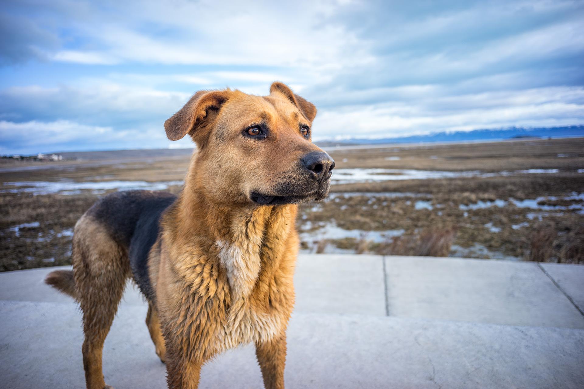 Pet Dog Photo Outdoors
