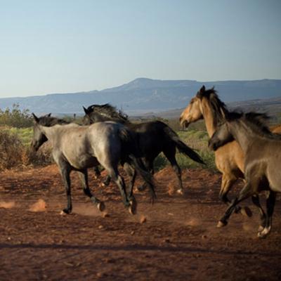 Where Heart Meets Horse   Mustang Adventure