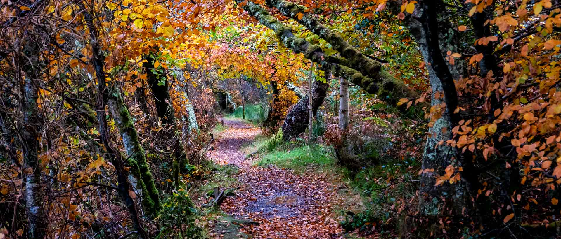 Autumn woods, Port Appin