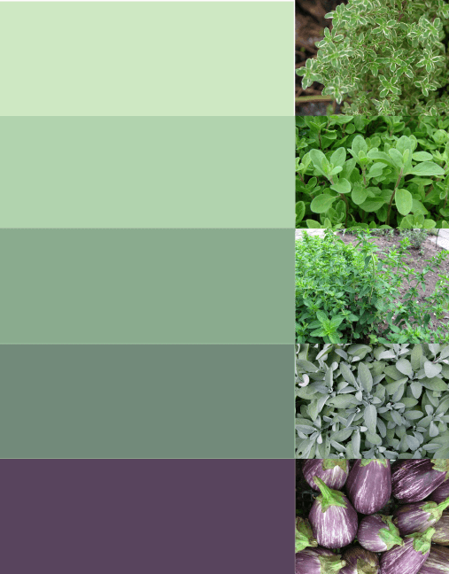 A palette of green colors for the HCC brand with color inspiration photos of fresh herbs.