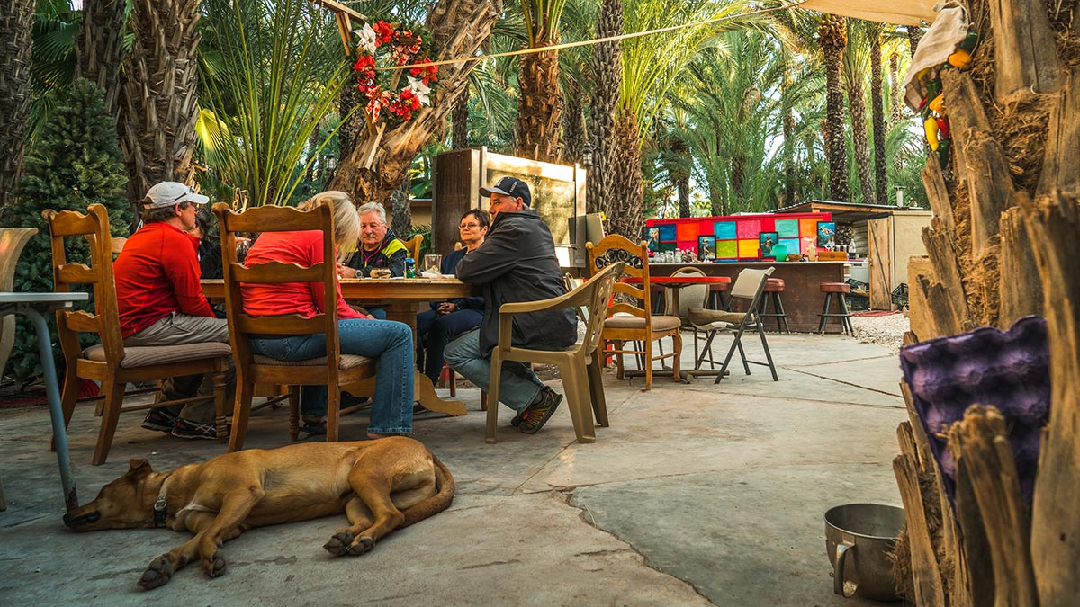 Enjoy a drink under the Date Trees with friends and other travellers