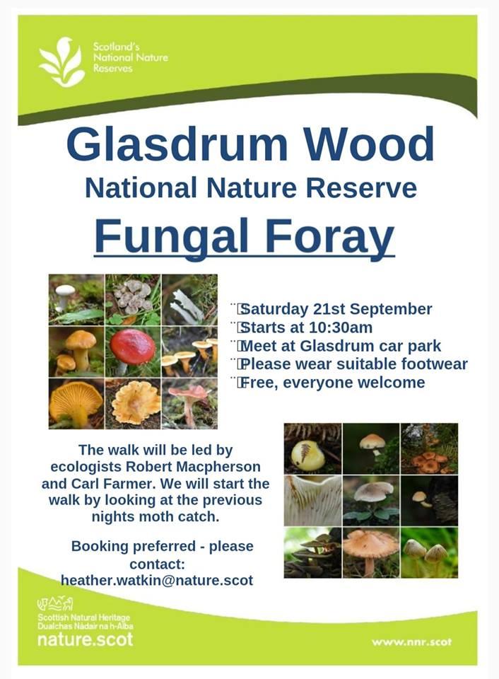 Fungi Foray at Glasdrum Wood NNR