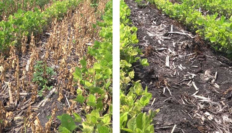 Side-by-side comparison of microbes consuming plant residue with CarbonWorks Replenish