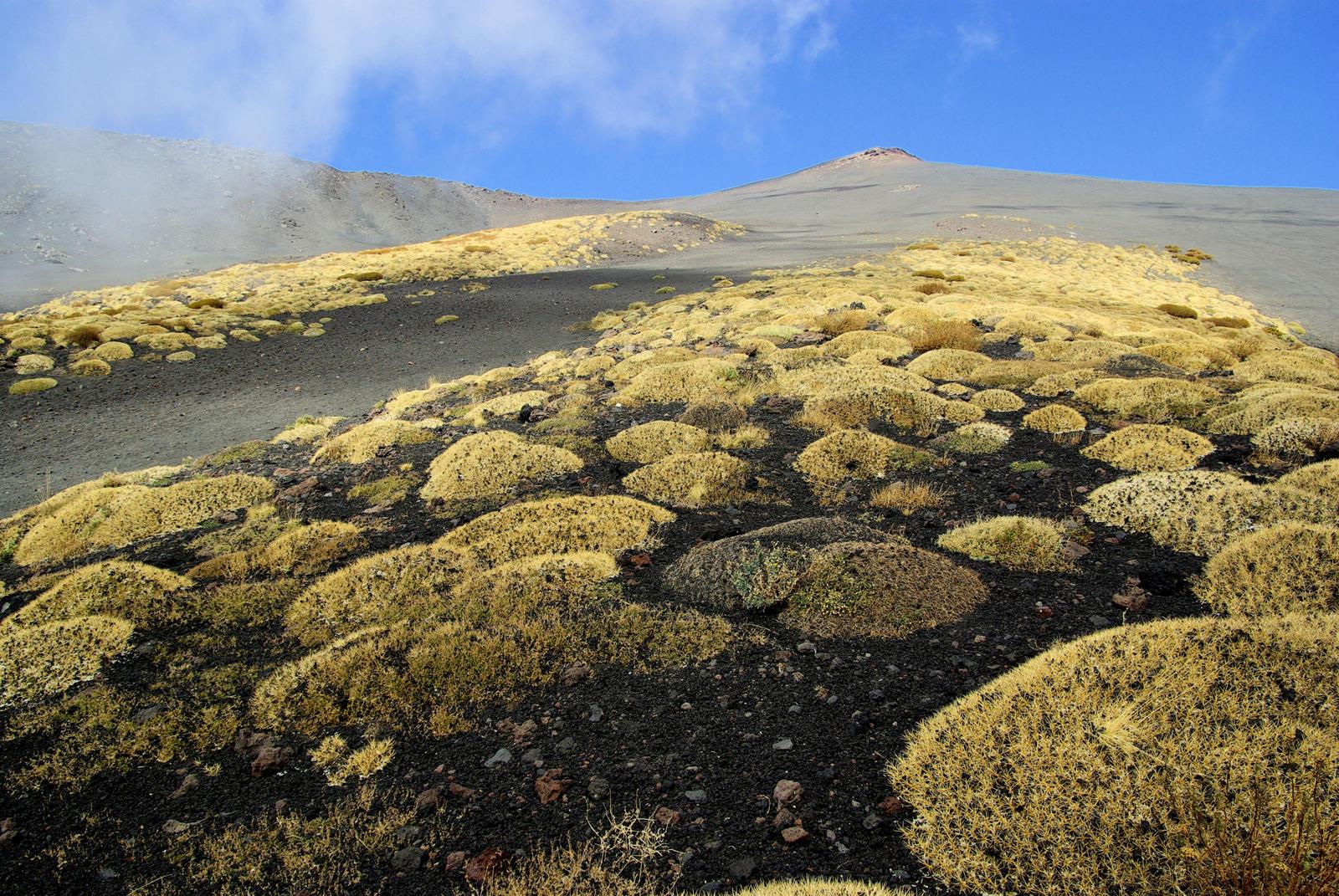 Foto van een helling van de Etna met gele mos