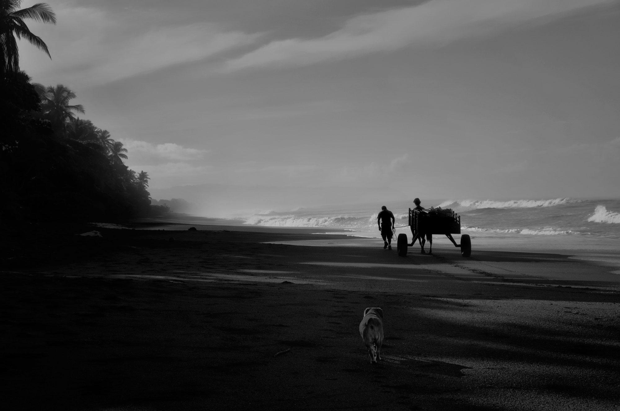 Man en wagen onderweg langs strand met honden