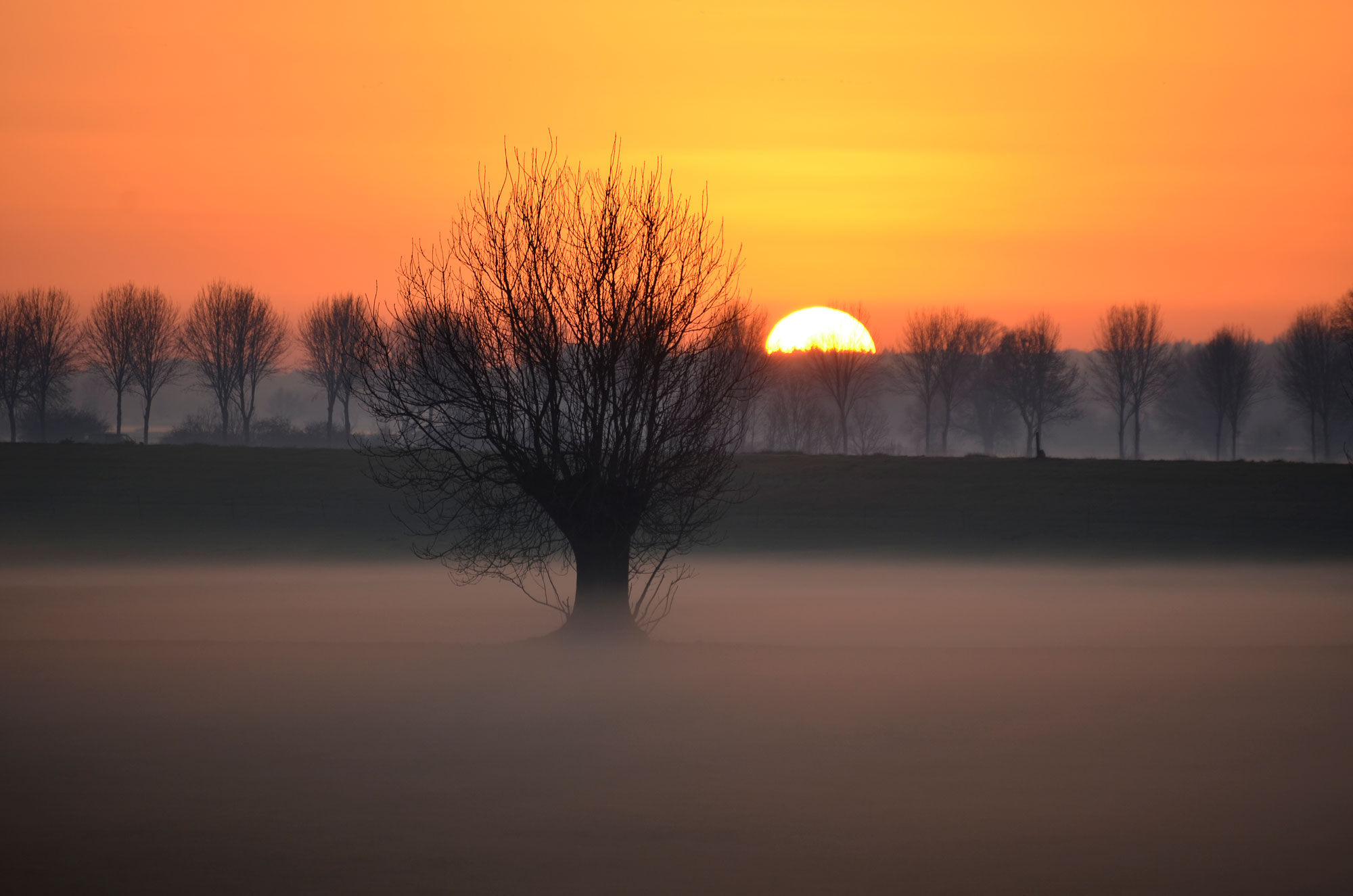 Winterzon in mistig landschap