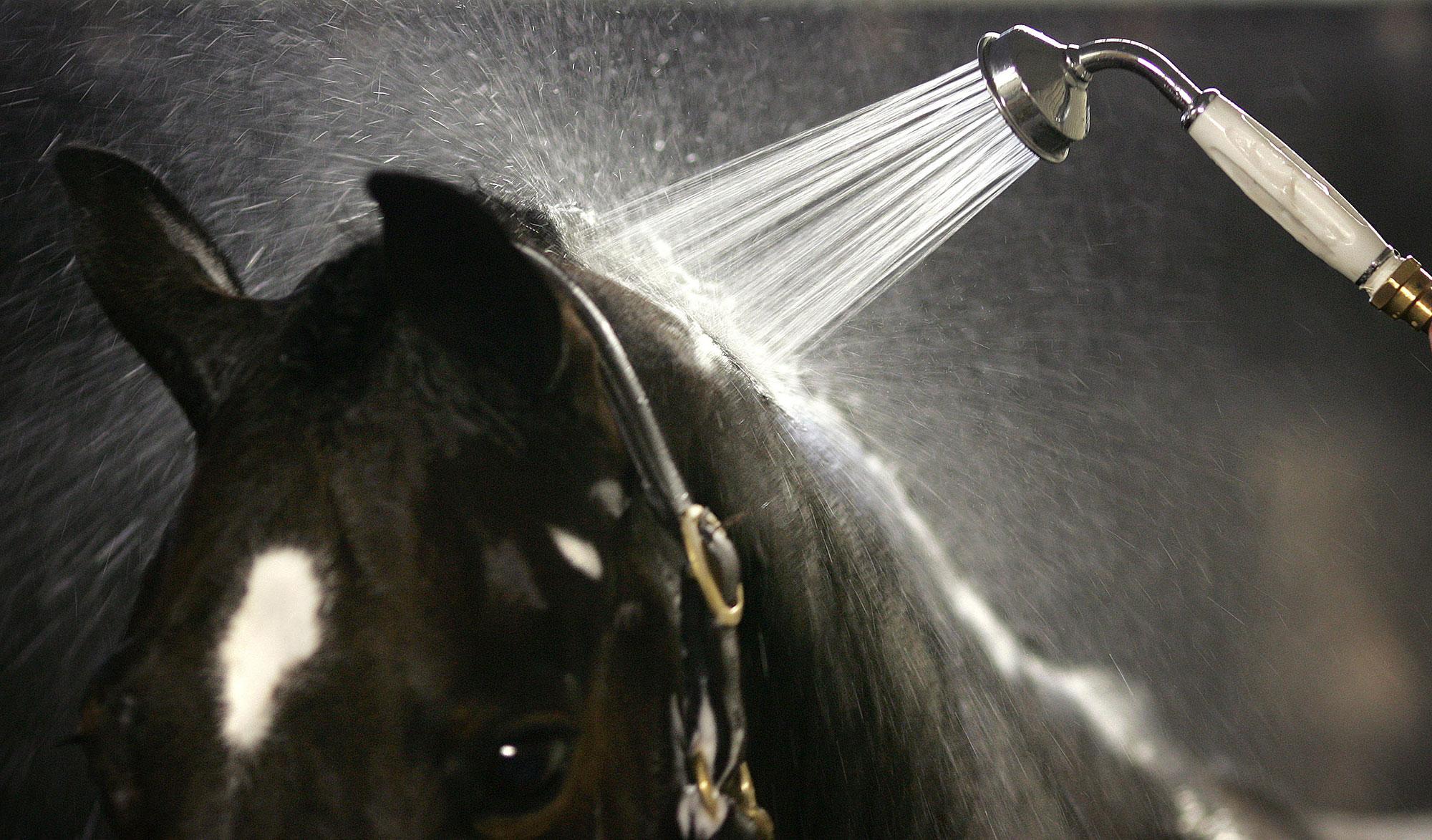Douchekop op paardenkop