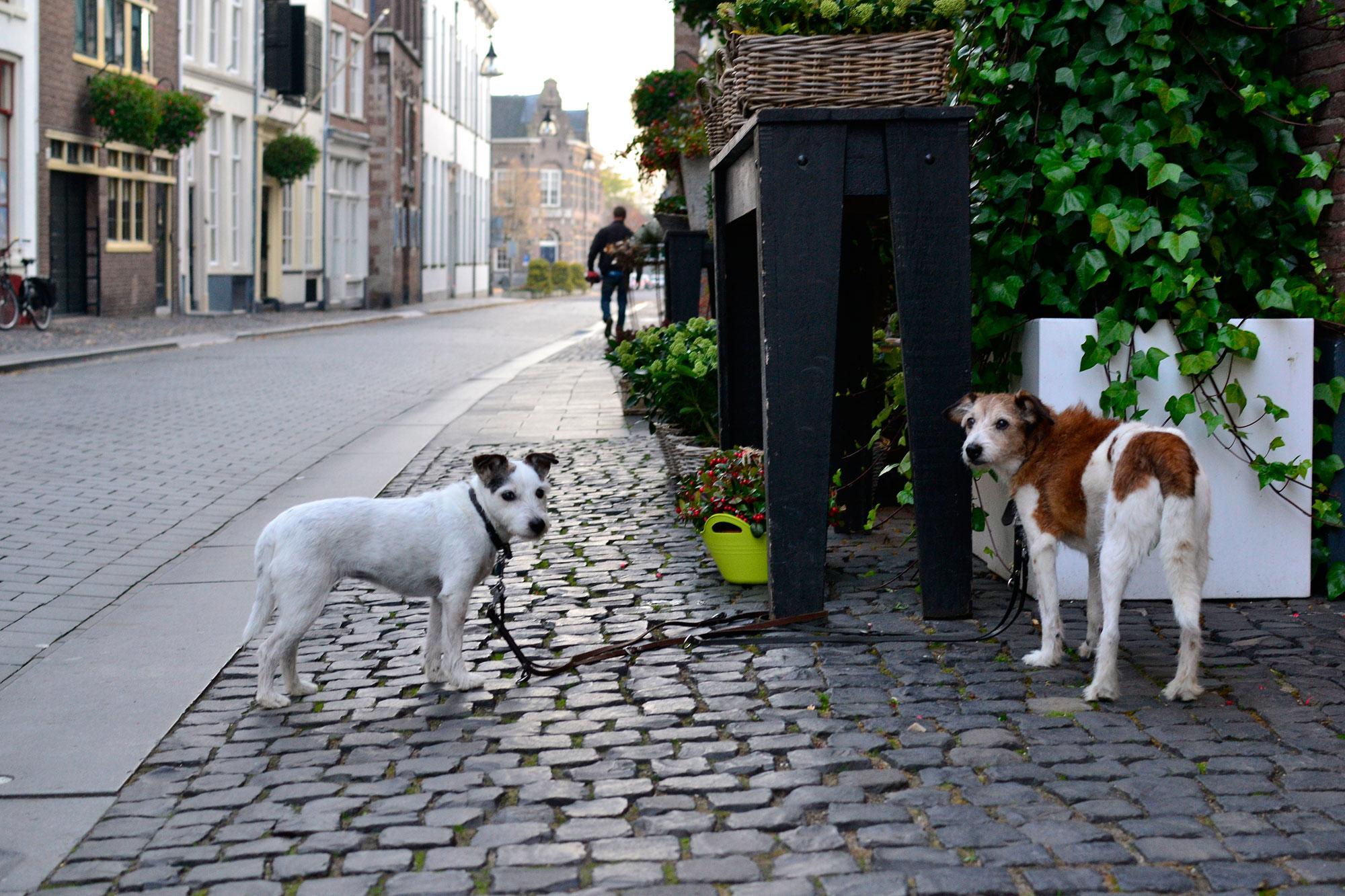 Twee hondjes wachten op baasje