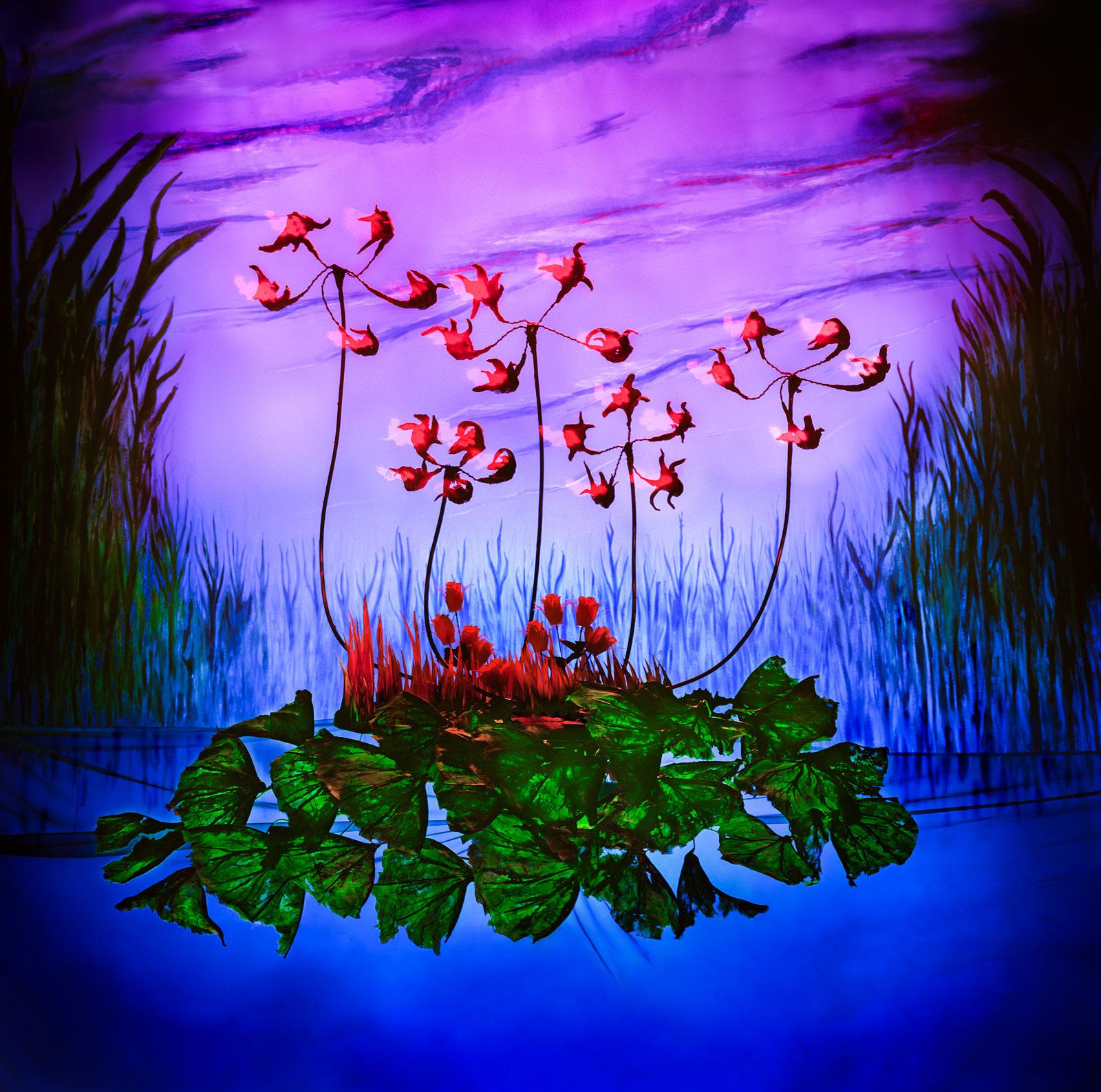 Zwanenbloemen door Jan van der Horn