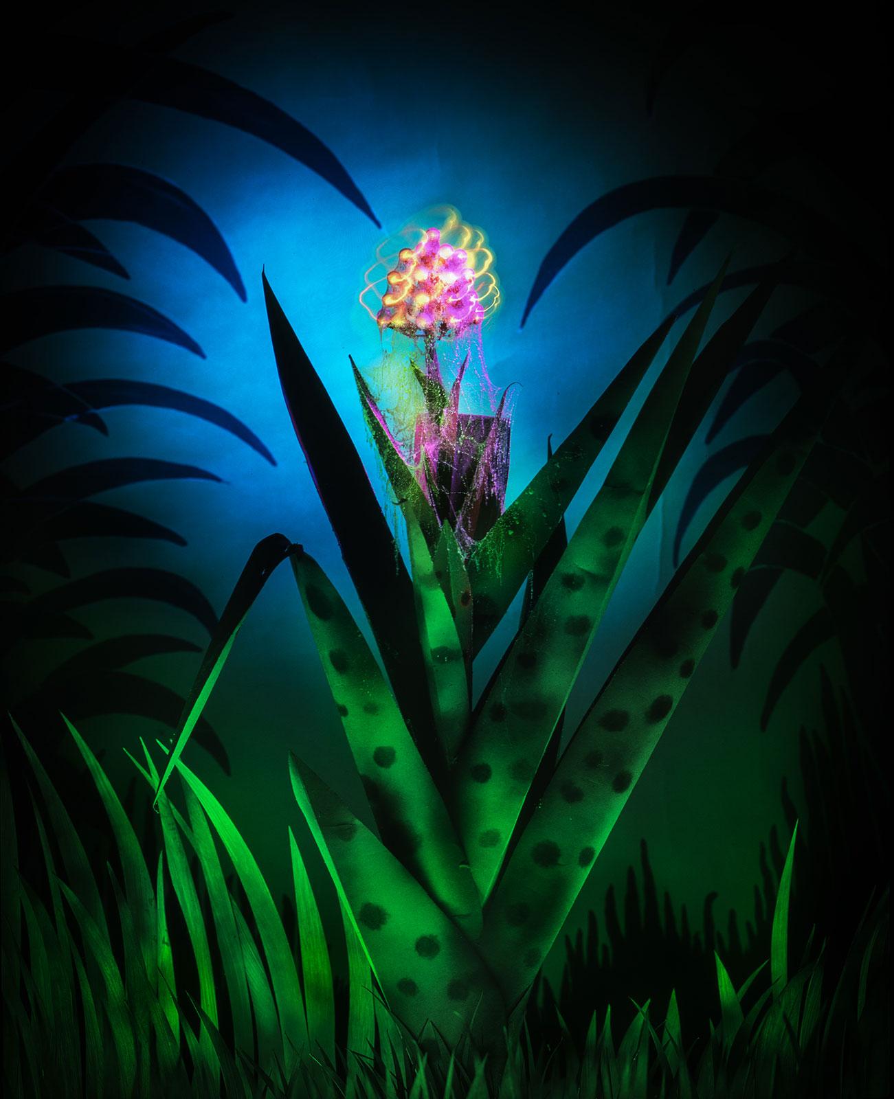 Orchidee, geënsceneerde fotografie van Jan van der Horn