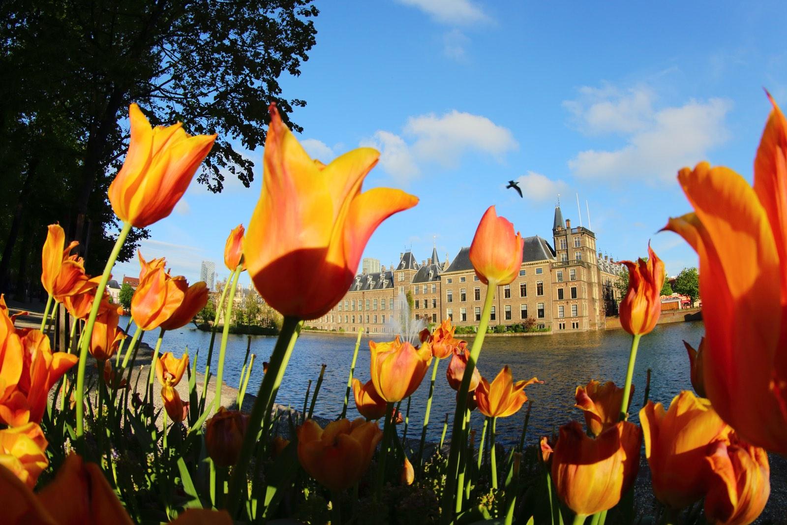 Binnenhof Den Haag vanuit tulpen aan overkant water