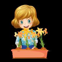 Çiçekçi Sümbül