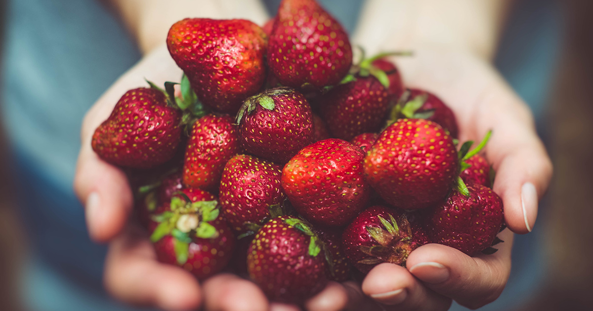 Picture of hands cupping a group of fresh red strawberries