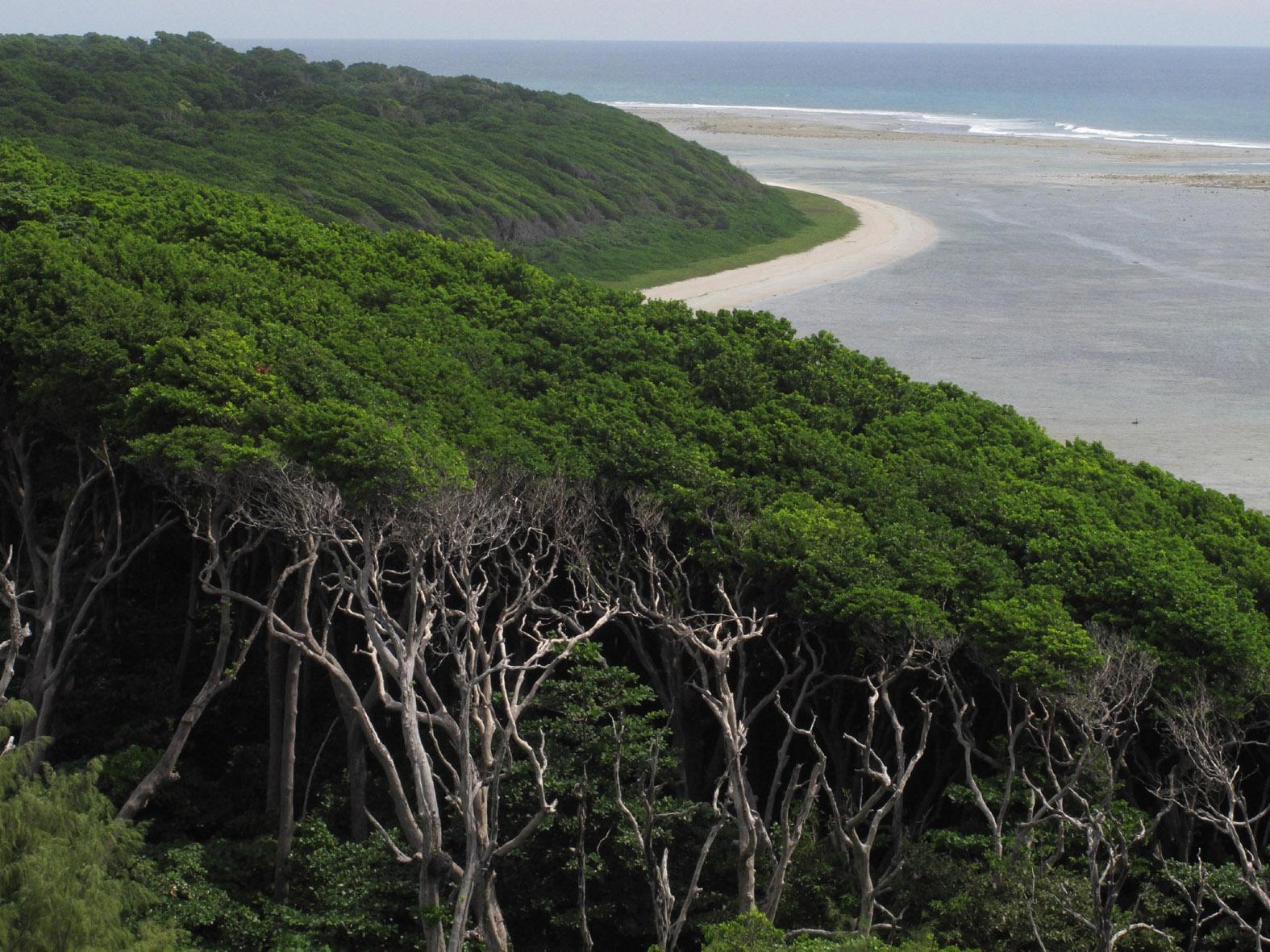 foto van bovenaf van landschap van bossen die grenzen aan de zee
