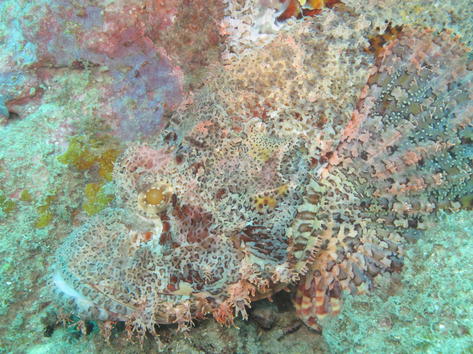 foto van een onderwaterkoraal