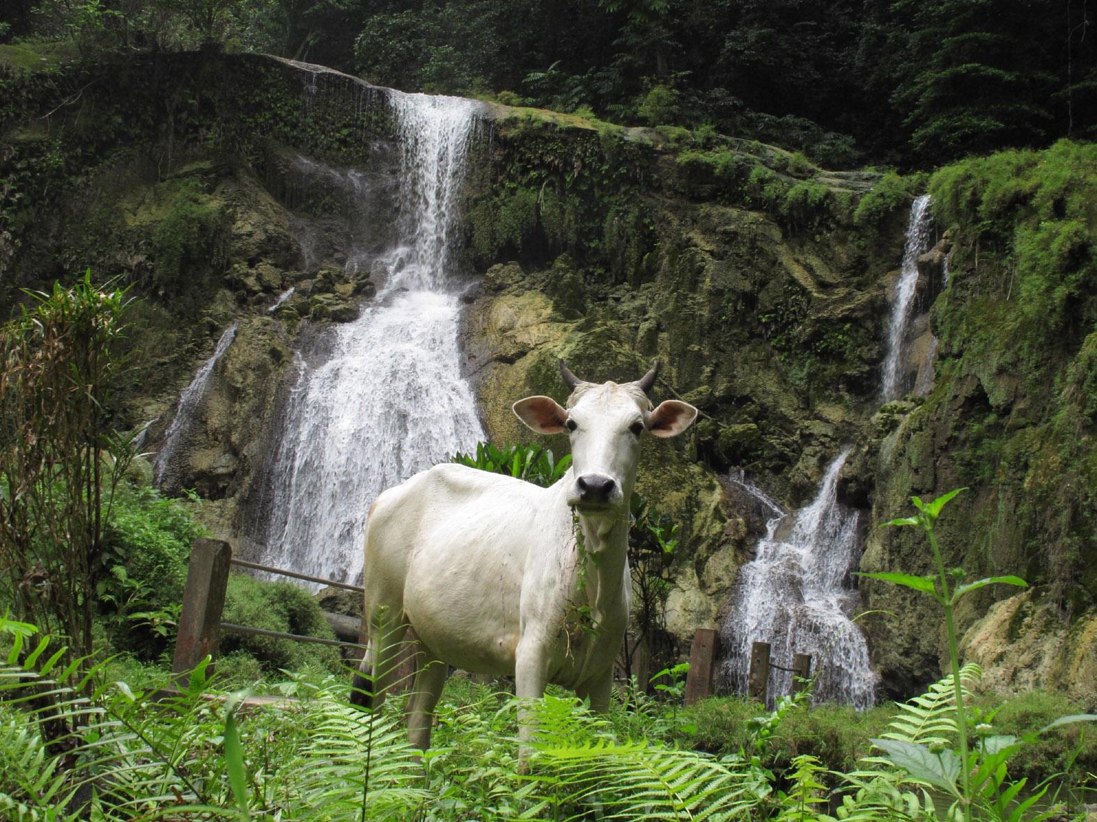 foto van een geit met op de achtergrond watervalletjes