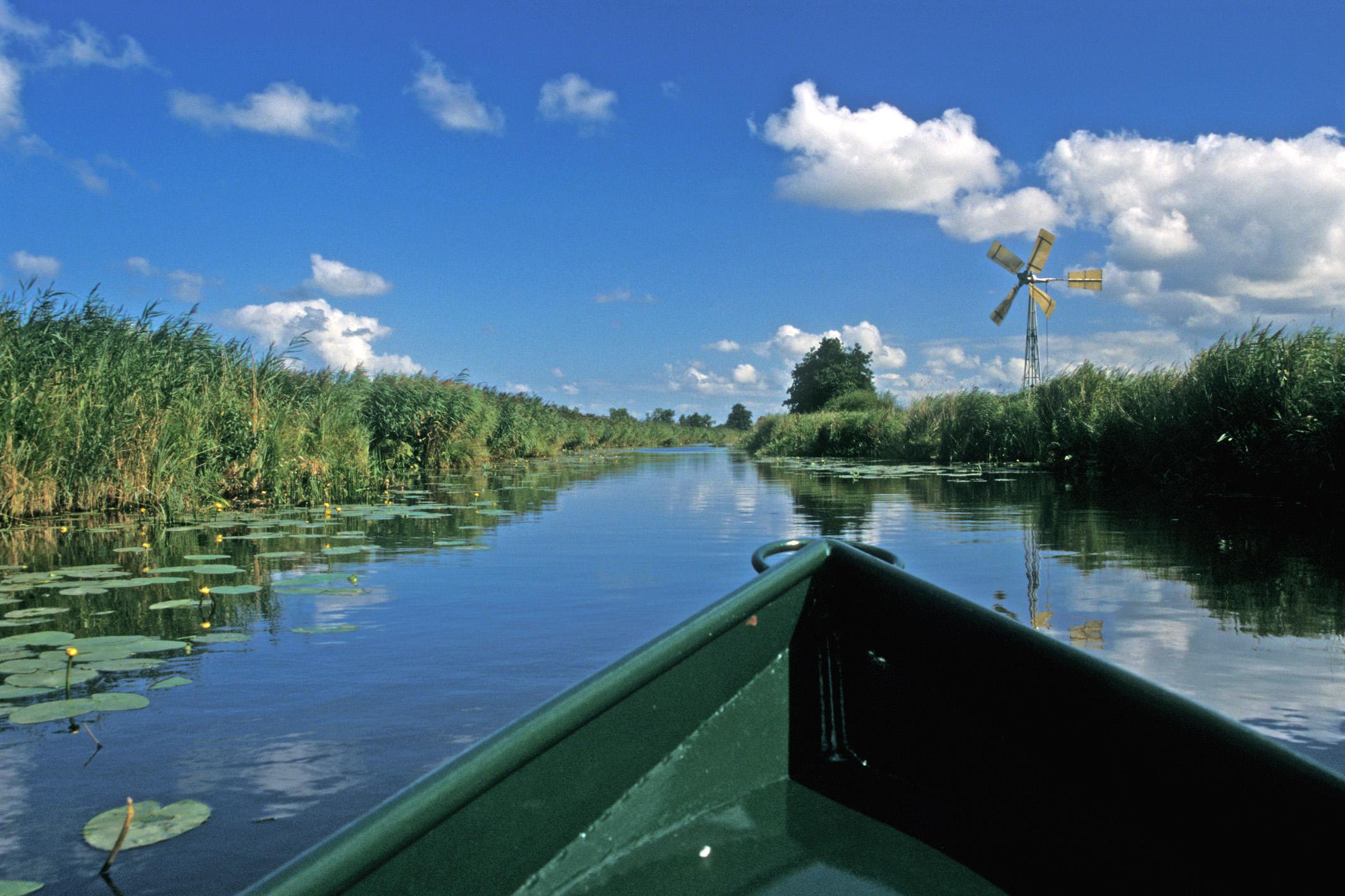 foto op water vanaf een fluisterboot genomen in Nederlands gebied met riet en waterlelies en blauwe lucht met wolkjes