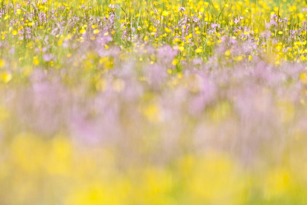 foto van weide met bloemen paars en geel