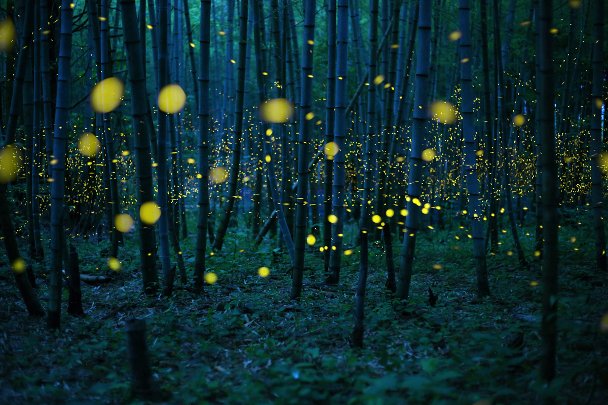 foto van Kei Nomiyama, Japan, Open Photographer of the Year, 2016 Sony World Photography Awards | Enchanted Bamboo Forest