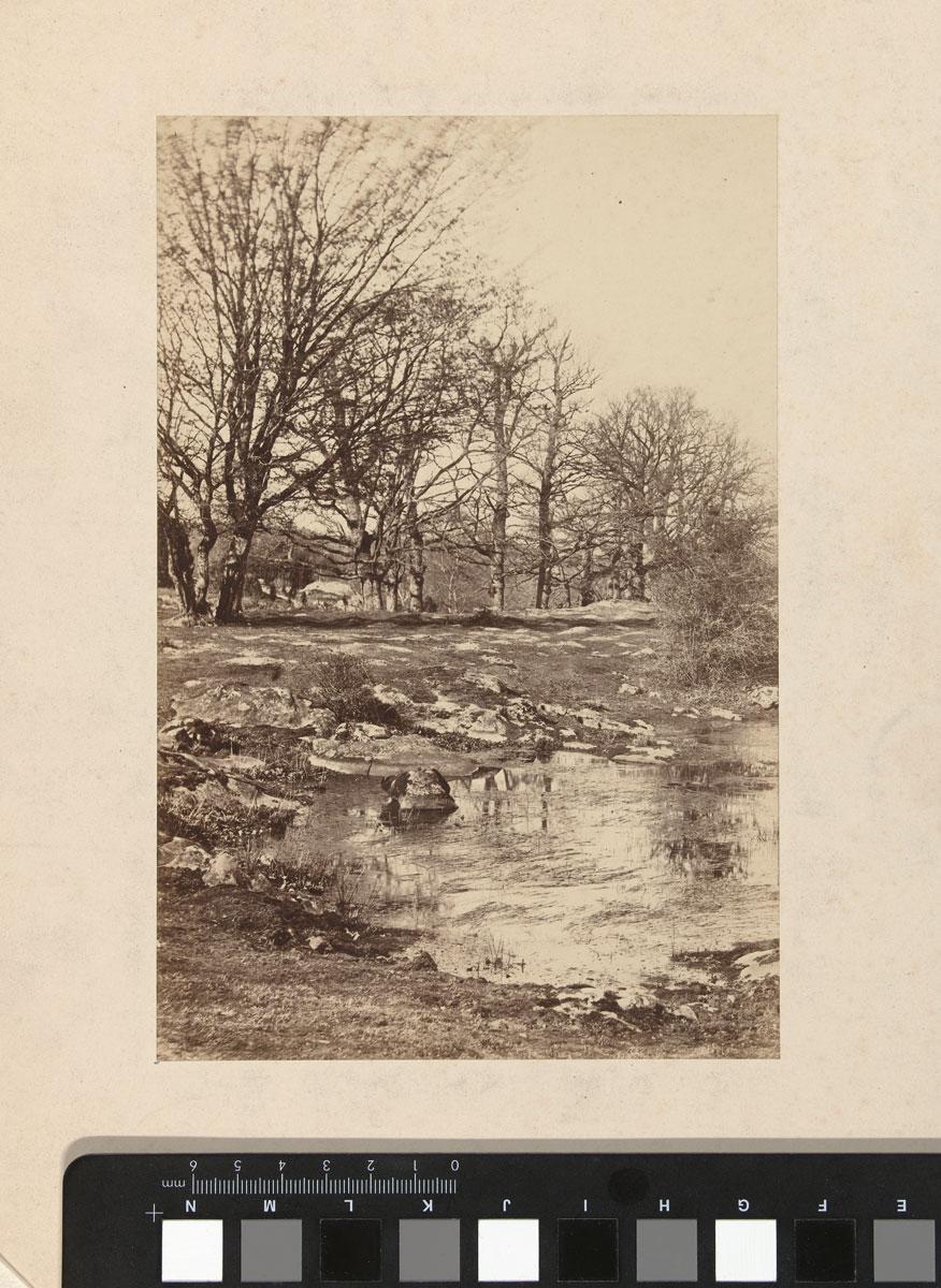 foto: Achille Quinet | Boslandschap in Fontainebleau, 1868-1875
