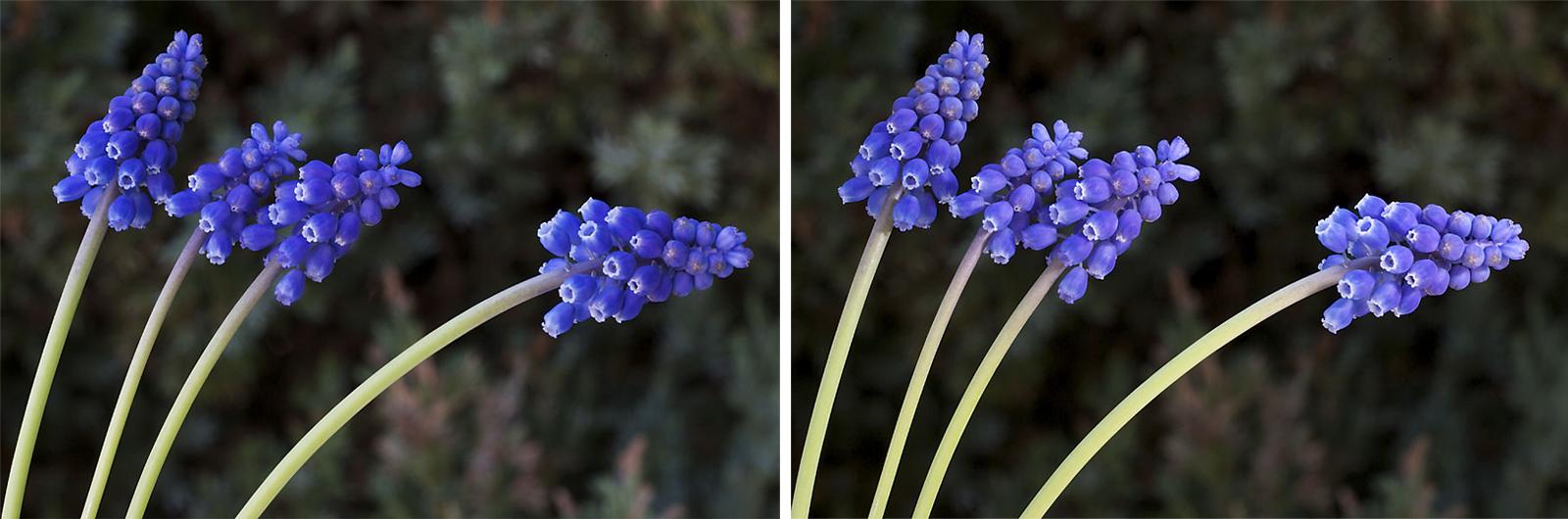 foto: Jan Duker | Bloemen; links zonder flits, rechts met flits